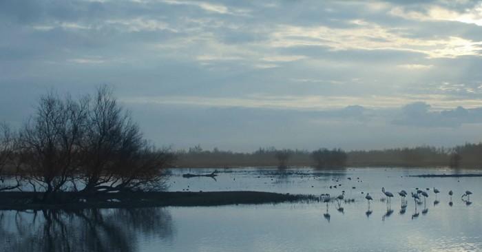 Amfibi 2014, segona part