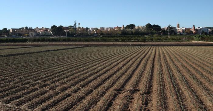 Horta de Godella