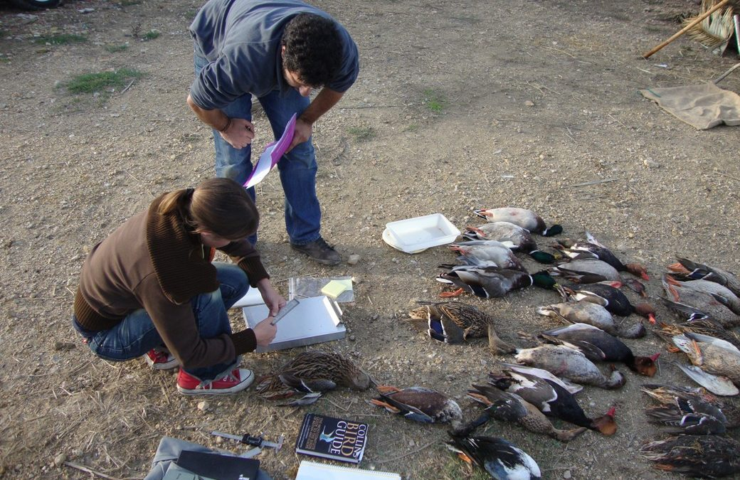 Estudi i caracterització de la caça a l'Albufera
