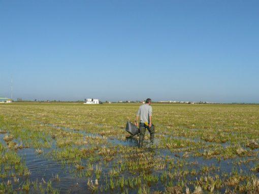 Estudio de la ecología de los macroinvertebrados en el arrozal