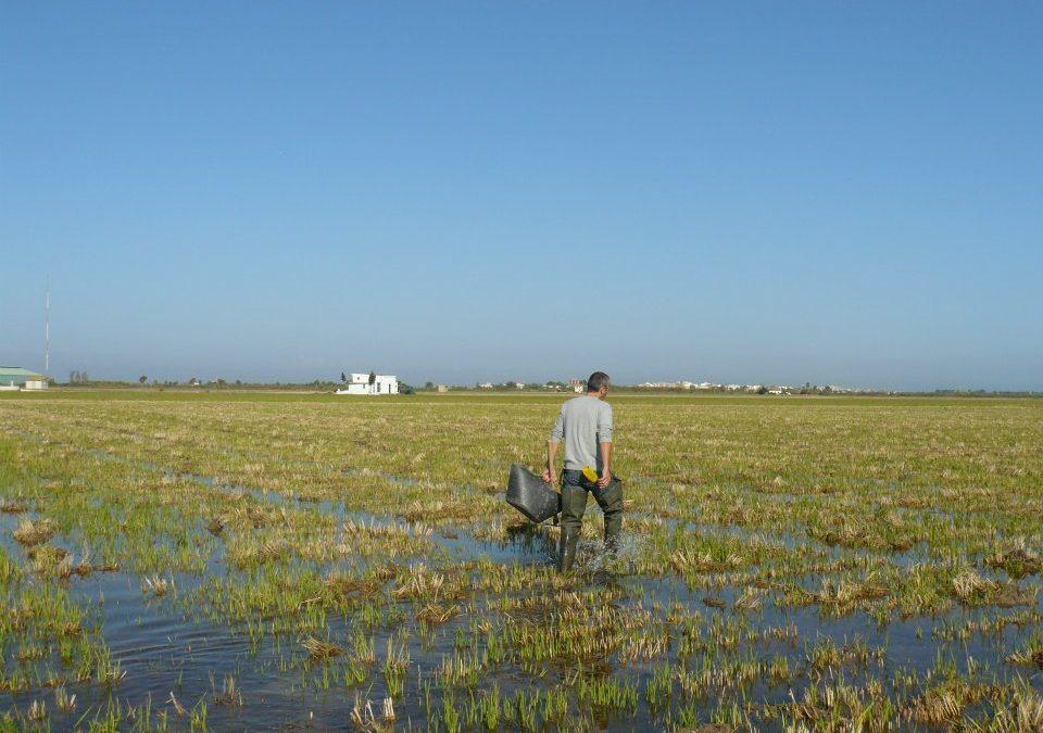 Estudi de l'ecologia dels macroinvertebrats a la marjal