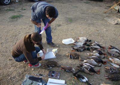Estudio y caracterización de la caza en L'Albufera