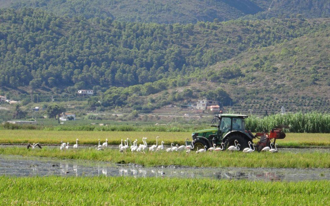 Arrozales de paso: Agricultores comprometidos con la biodiversidad en L'Albufera